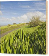 Ulupalakua Country Road Wood Print by Ron Dahlquist - Printscapes