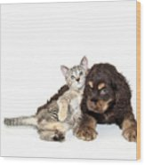 Very Sweet Kitten Lying On Puppy Wood Print by StockImage