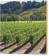 Vineyards In Sonoma County Wood Print by Charlene Mitchell