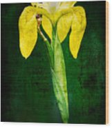 Vintage Canna Lily Wood Print by Rich Leighton
