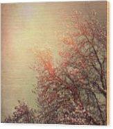 Vintage Cherry Blossom Wood Print by Wim Lanclus