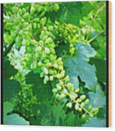 Vintage Vines  Wood Print by Carol Groenen