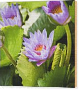 Water Lilies Wood Print by Ray Laskowitz - Printscapes