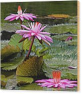 Water Lillies-st Lucia Wood Print by Chester Williams