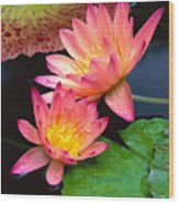 Water Lily Wood Print by Bill Brennan - Printscapes