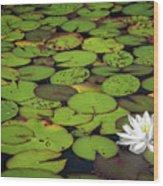 Water Lily Wood Print by Elisabeth Van Eyken