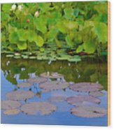 Water Lily Sky Wood Print by Nada Frazier