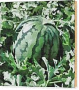 Waterelons In A Vegetable Garden Wood Print by Lanjee Chee