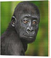 Western Lowland Gorilla Baby Wood Print by Julie L Hoddinott