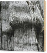 Western Red Cedar - Thuja Plicata - Olympic National Park Wa Wood Print by Christine Till