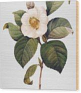 White Camellia Wood Print by Granger