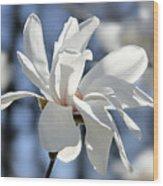 White Magnolia  Wood Print by Elena Elisseeva