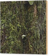 White Mushrooms - Quinault Temperate Rain Forest - Olympic Peninsula Wa Wood Print by Christine Till
