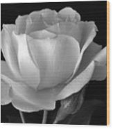 White Rose Wood Print by Terence Davis