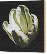 White Tulip Wood Print by Sarah Loft
