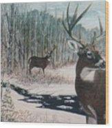 Whitetail Deer Wood Print by Ben Kiger