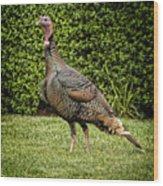 Wild Turkey Wood Print by Kelley King