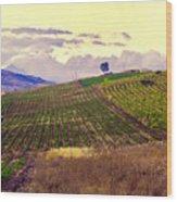 Wine Vineyard In Sicily Wood Print by Madeline Ellis