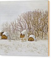 Winter Beauty Wood Print by Deborah Benoit