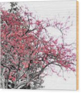 Winter Berries Wood Print by Scott Hovind