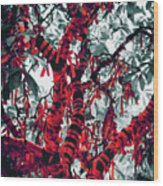 Wishing Tree Wood Print by Wim Lanclus