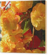 Yellow Begonia Flowers.  Victoria Wood Print by Darlyne A. Murawski
