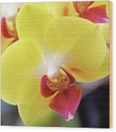 Yellow Phalaenopsis Orchids Wood Print by Rona Black