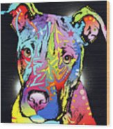 Young Bull Pitbull Wood Print by Dean Russo