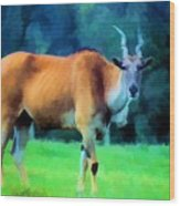 Young Eland Bull Wood Print by Jan Amiss Photography