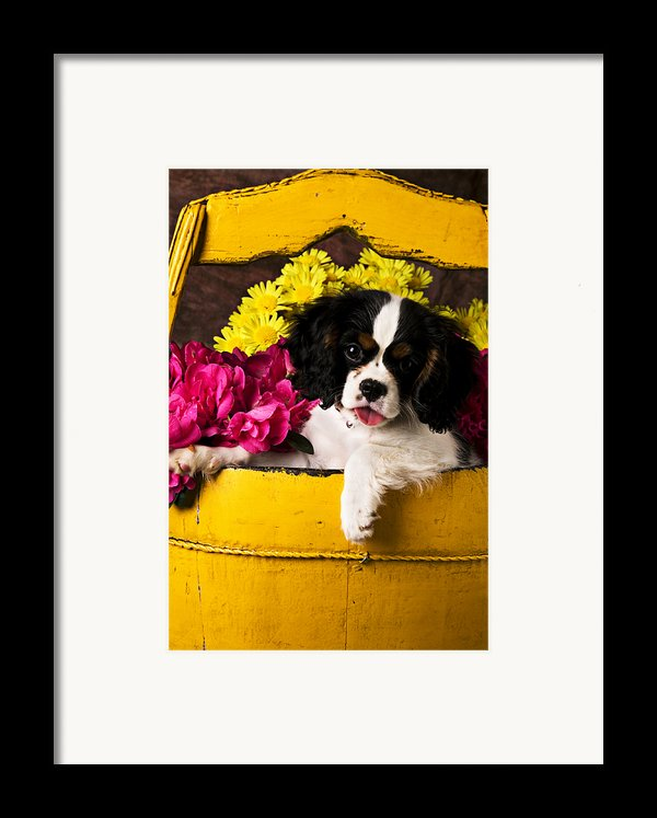Puppy In Yellow Bucket  Framed Print By Garry Gay