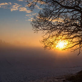 Aldona Pivoriene -  Sunbeams pour through the tree at the misty winter sunrise