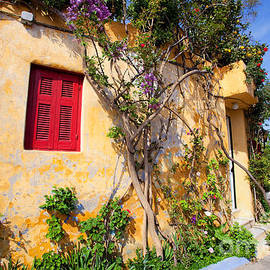 Aiolos Greek Collections -  Decorated house with plants