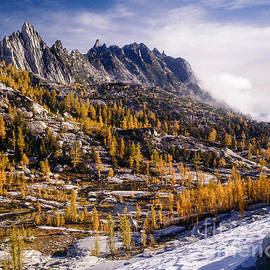 Tracy Knauer -  Enchantment Lakes Larch Trees