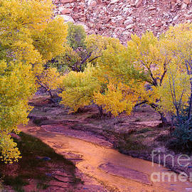 Fremont River Cottonwoods by Tracy Knauer