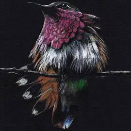 JEWEL   Amethyst-Throated Hummingbird by Rebecca Rees