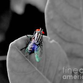 Just A Fly by Michelle Meenawong