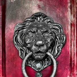Colleen Kammerer -  Lion