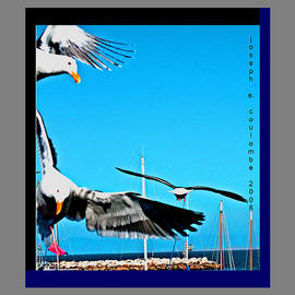 West Coast Sea Birds by Joseph Coulombe