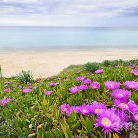 Aegean Sea Coast In Greece by Elena Elisseeva