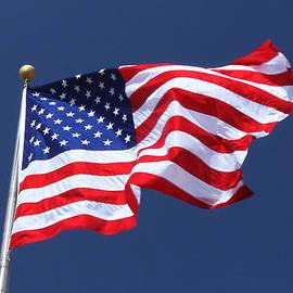 James Hammen - American Beauty