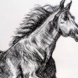 Arabian Horse by Paul Sutcliffe