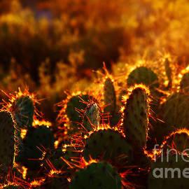 Arizona Cactus by Susanne Van Hulst