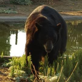 Bear 1 by Phyllis Spoor