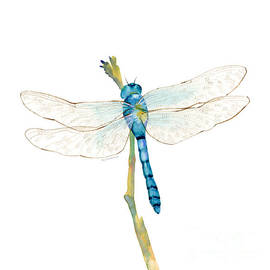 Blue Dragonfly by Amy Kirkpatrick