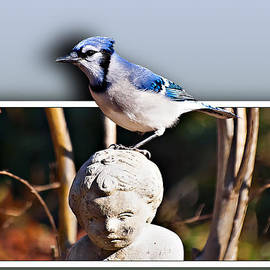 Blue Jay by Michael Whitaker