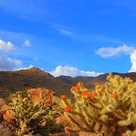 Cactus In Spring