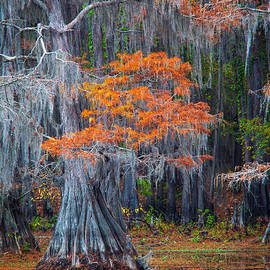 Inge Johnsson - Caddo Lake Autumn