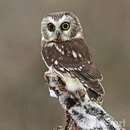 Inspired Nature Photography Fine Art Photography - Captivation