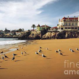 Cascais Seagulls by Carlos Caetano