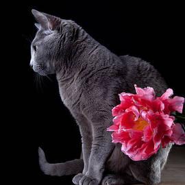 Nailia Schwarz - Cat and Tulip